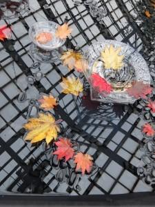 紅葉の水盤展ハウチワカエデ