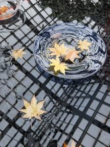 紅葉の水盤展オオモミジ