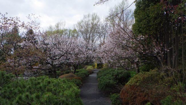 世界の庭園 日本庭園