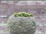 札幌軟石とコケ