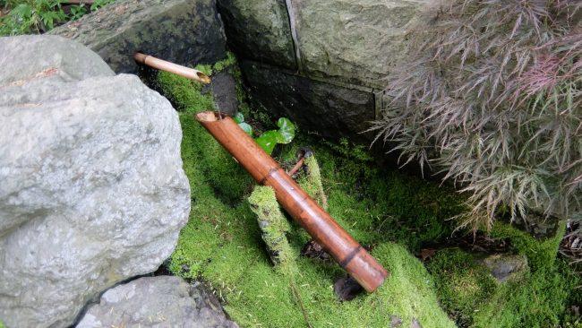 日本庭園のコケ