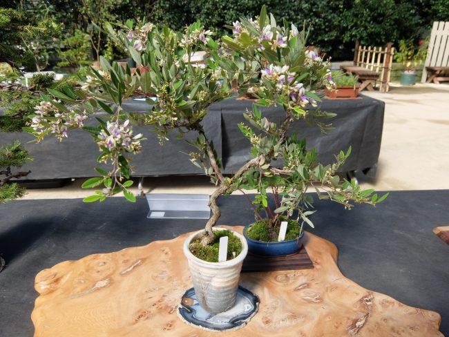 花もの盆栽