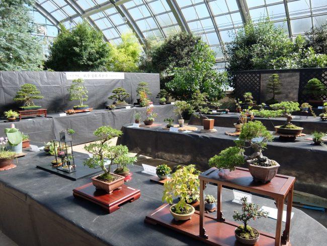 盆栽展の様子