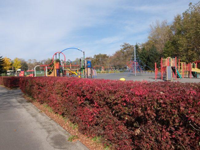 遊具広場横の紅葉