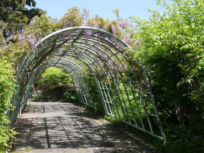 藤棚(世界の庭園内)