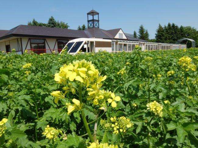 リリートレイン駅舎と菜の花
