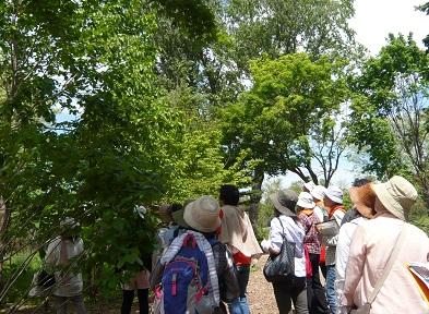 ガイドボランティアが秋の百合が原公園をご案内します