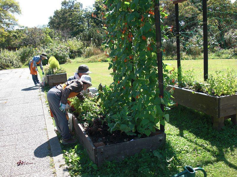 花と野菜とボランティア。