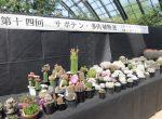 サボテン・多肉植物展会場