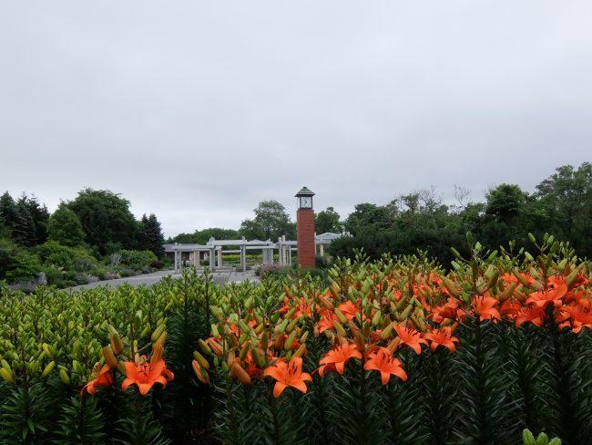 公園入口花壇