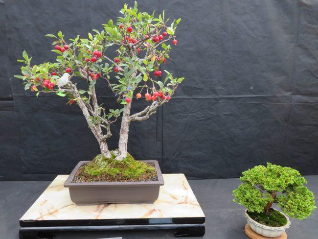 ヒメリンゴと津山檜の作品