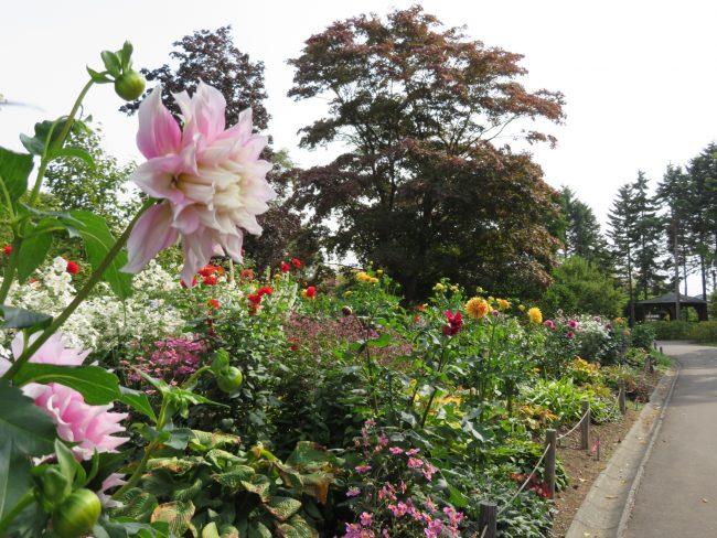 世界の庭園入り口ボーダー花壇