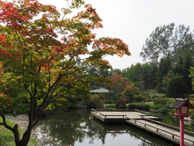 日本庭園紅葉し始め