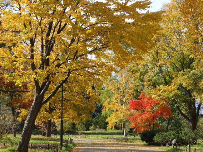 公園内紅葉