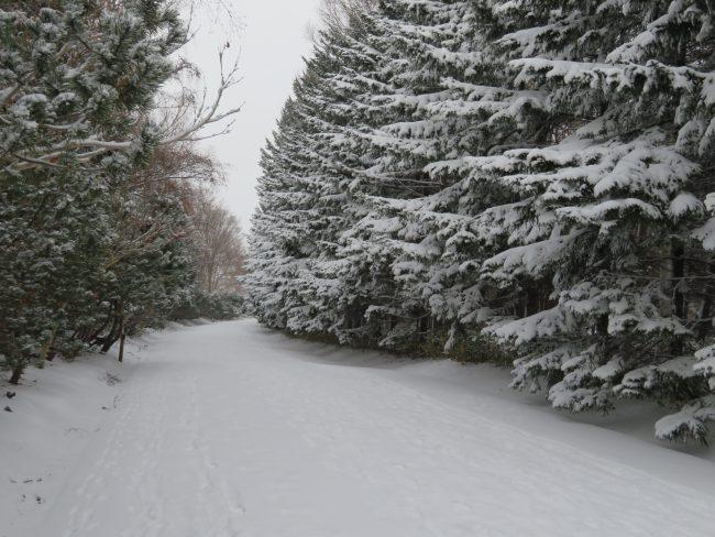 百合が原公園園路