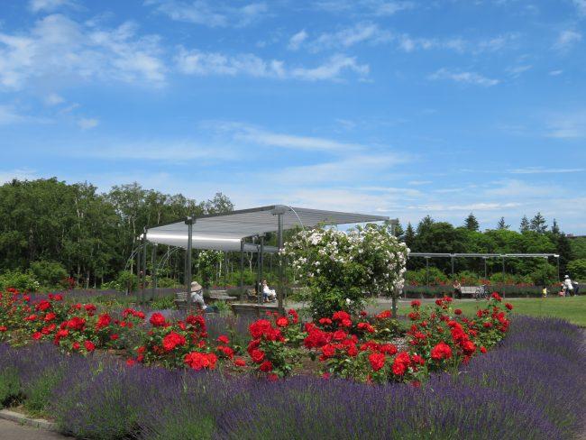バラとラベンダーの共演が美しいモニュメント広場