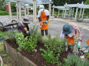 チョコレートミントやローズマリーなどハーブが植栽された花壇