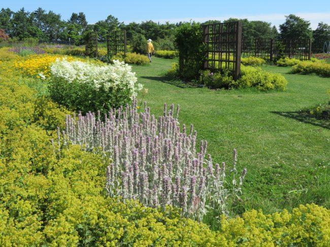 除草されてスッキリしたかおりの庭