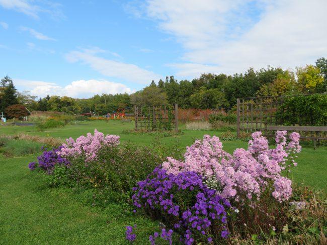 かおりの庭(10月上旬)