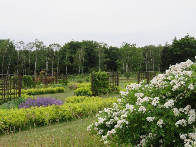 かおりの庭(6月下旬)