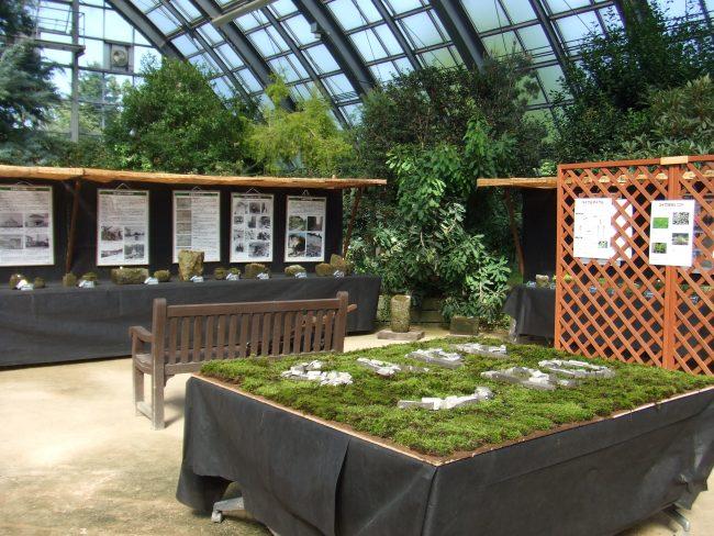 札幌軟石とコケ展