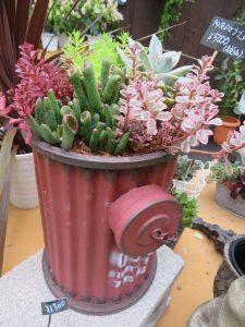 ポスト型の陶器に寄せ植えされた多肉植物