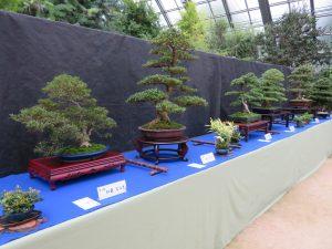 「さつき盆栽秋季展」開催です