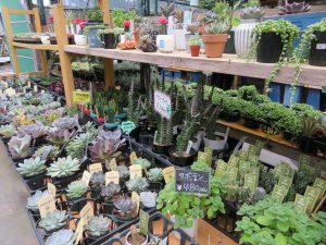 サボテンと多肉植物