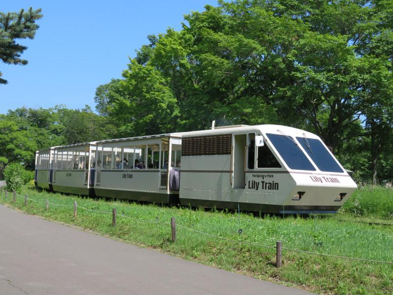 Lily Train