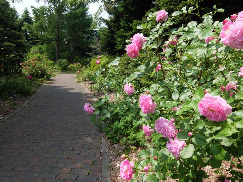 The Rose Walk
