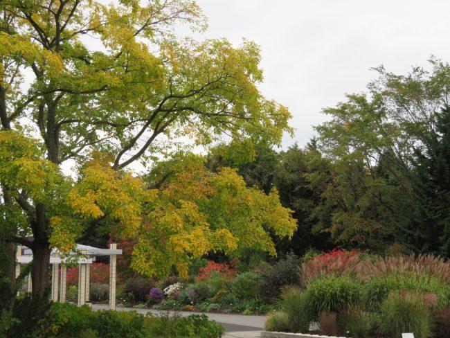 温室横の花木園