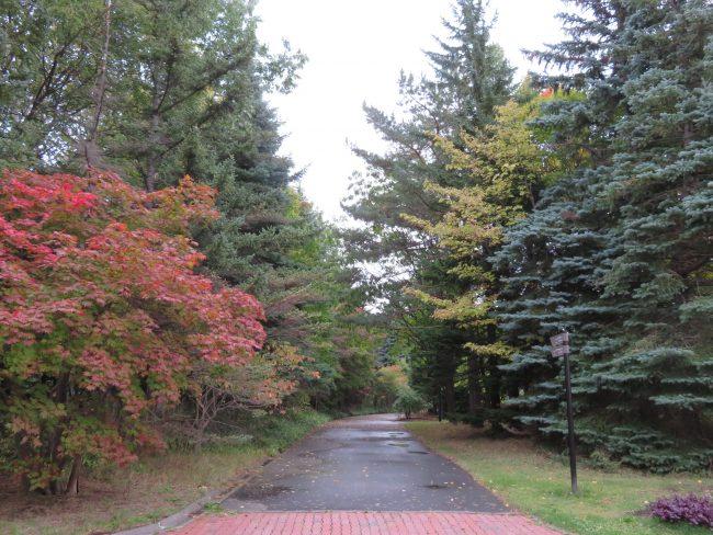 温室前からローズウォークへ続く道