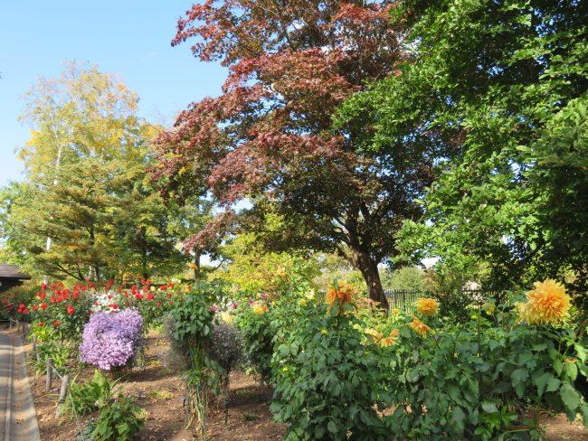 世界の庭園入口、ボーダー花壇のダリア