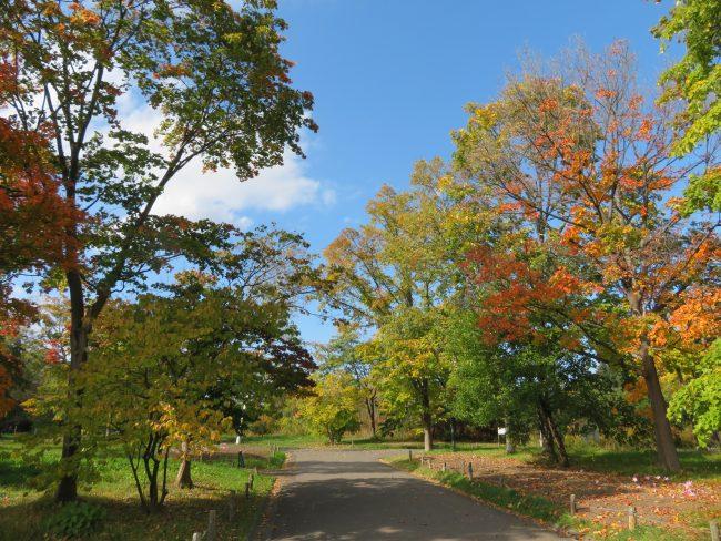園路の紅葉
