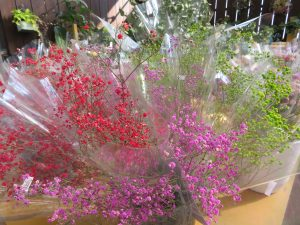 赤やピンクのドライ花材