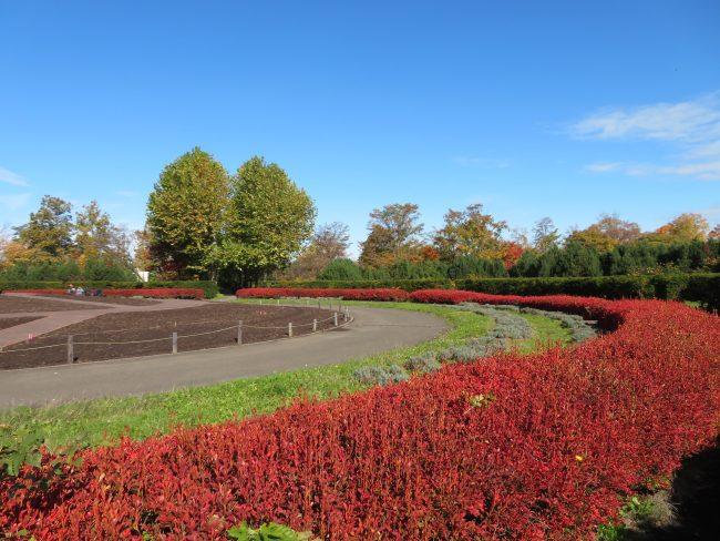 中央花壇の紅葉