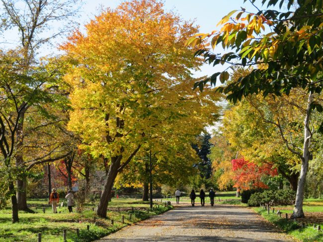 紅葉が楽しめる園路