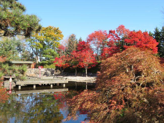 日本庭園紅葉