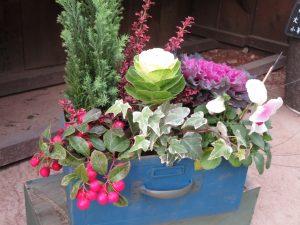 葉ボタンやチェッカーベリーなどの寄せ植え