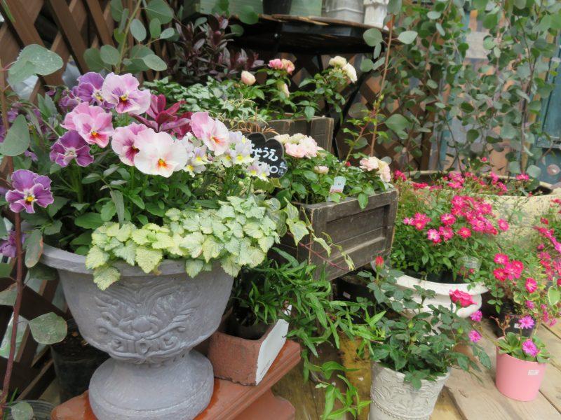 ガーデンショップのオススメ春の花苗たち