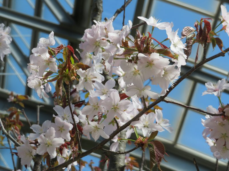 本日より春の花展開催です!