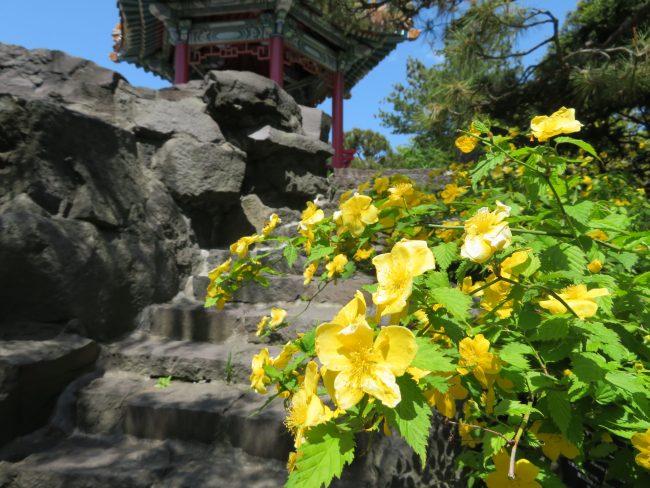 開花情報(世界の庭園、桜並木、ムスカリの道、ライラックなど)