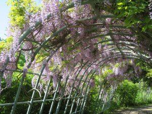 フジの香りもやわらかに香る世界の庭園
