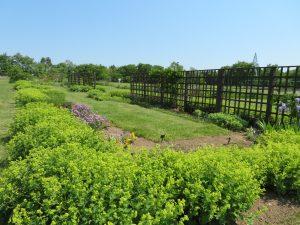 札幌の気候に合った芳香性宿根草を主体とした花壇のかおりの庭
