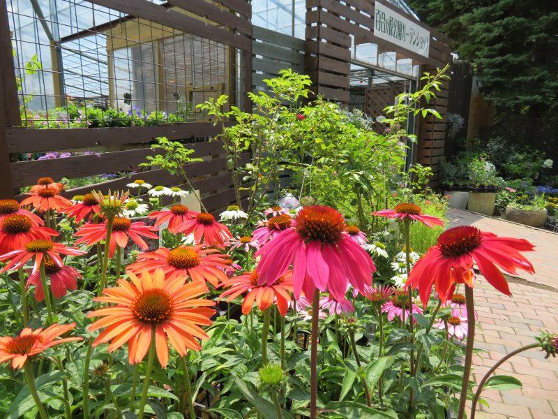 花色で溢れるガーデンショップ