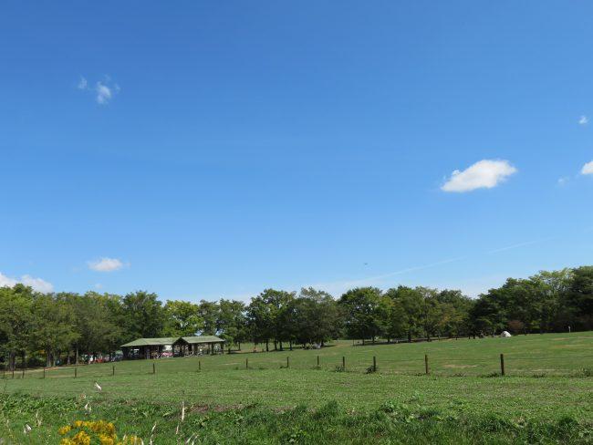 青空広がる芝生広場