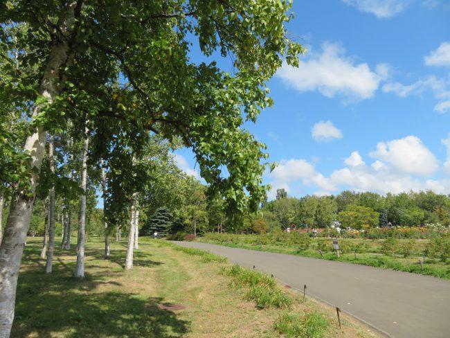 シラカバ林横の園路からはダリア園も見える