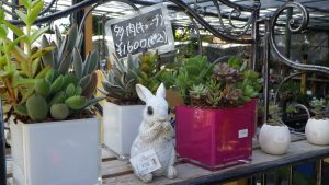 ウサギの置物と多肉植物