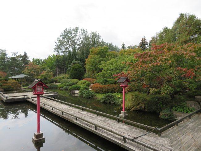 紅葉が楽しめるようになってきた日本庭園